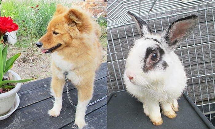 神谷川の動物達 犬・ウサギ写真